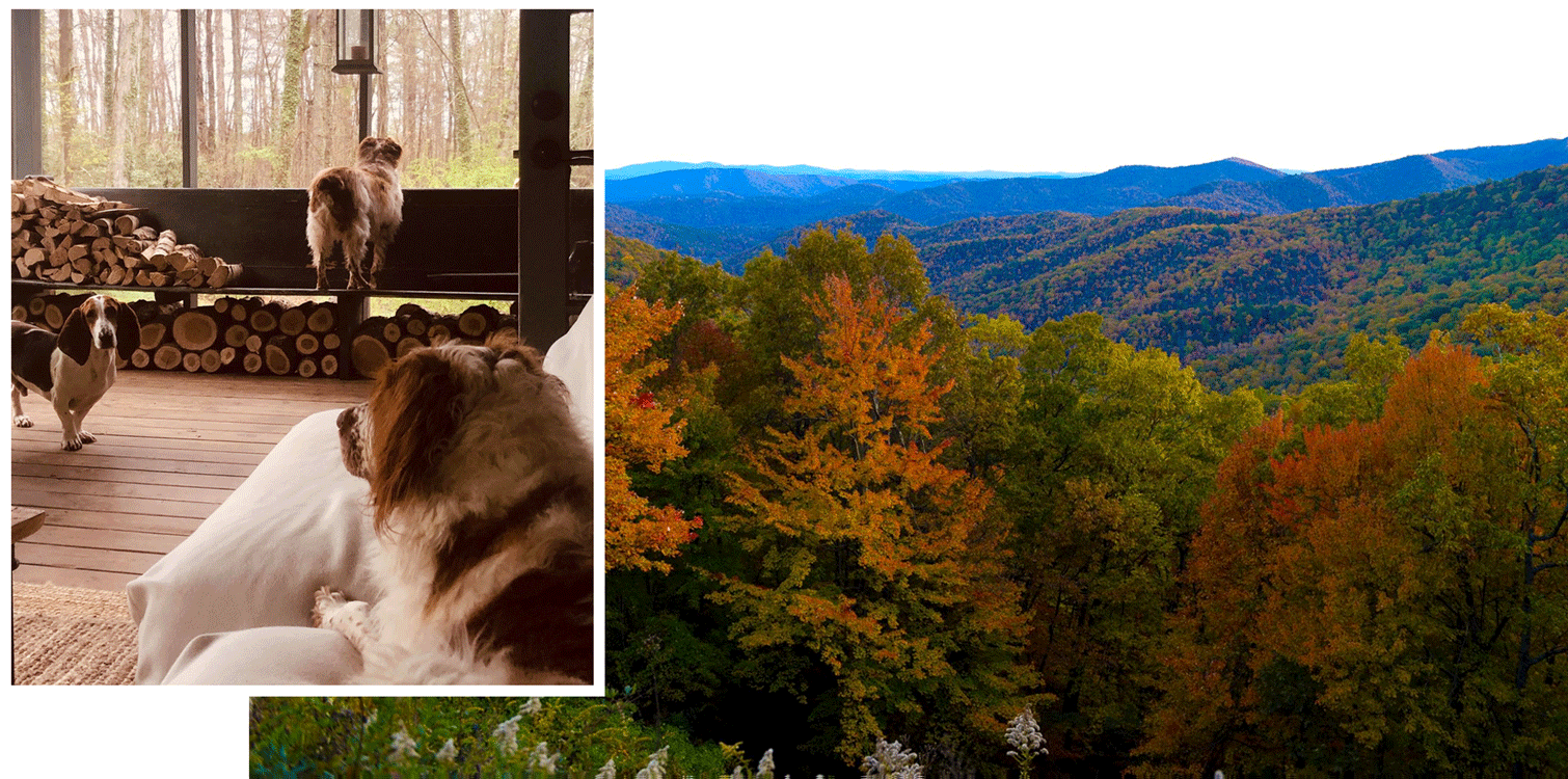 Three dogs and a view of Asheville, Noth Carolina.